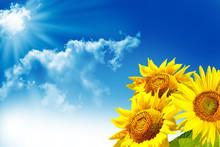 Beautiful Sunflower Field In Summer. Yellow Flowers