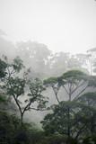 misty jungle forest - 115454886