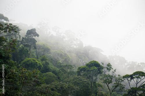 Fotografie, Obraz  Misty forest jungle