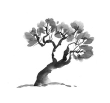 Old Tree Hand Drawn In Black And White. Ink Illustration