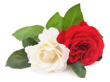 White And Red Rose.