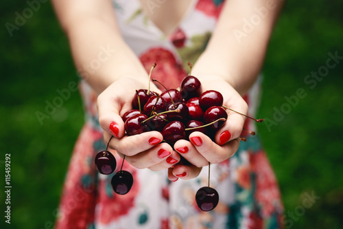 Montage in der Fensternische Kirschblüte Close up of hands full of cherries. Photo with shallow depth of field.