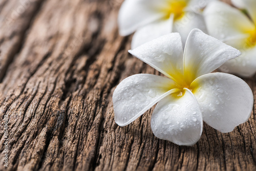Tuinposter Frangipani white Plumeria on wood background