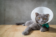 Sick Cat With Funnel Cone Coll...