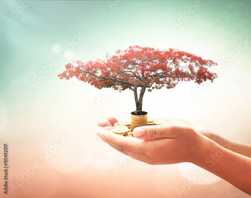 Fotografía  Investment concept: Human hand holding red big tree and stack of golden coins over blurred autumn nature background
