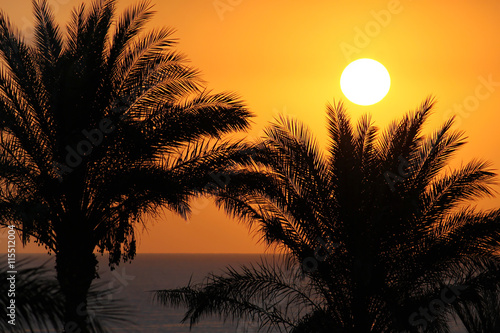 Silhouettes of palm trees above the sea and rising sun