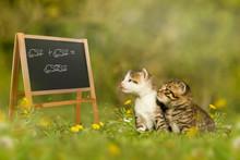 Zwei Kätzchen Sitzen Vor Einer Schultafel
