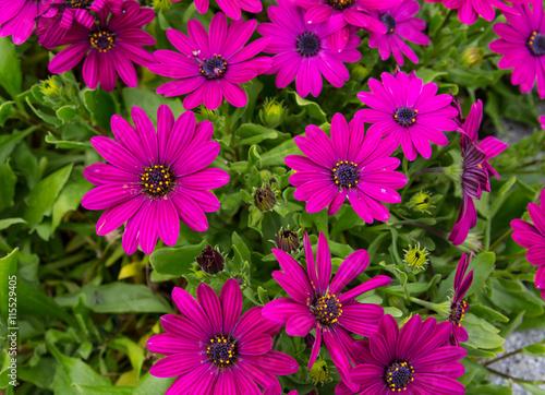 plakat Flores