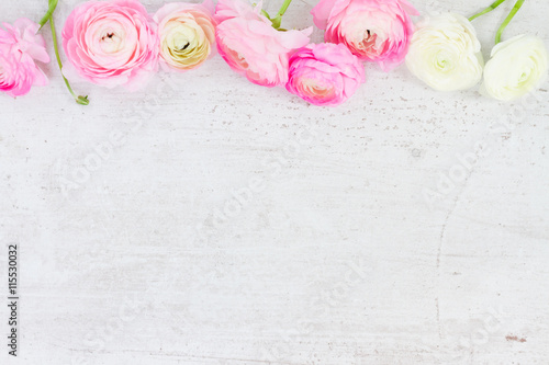 Pink and white ranunculus flowers on aged white wooden background with copy space