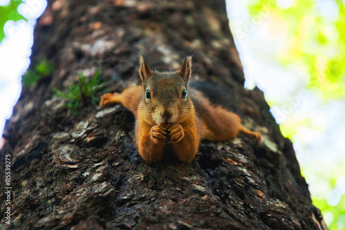Foto op Plexiglas Eekhoorn squirrel on the tree