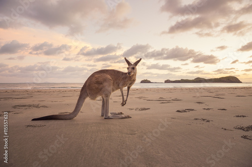 Kangaroo standing on beach against cloudy sky