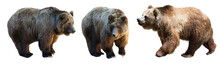 Set Of 3 Brown Bears Over White