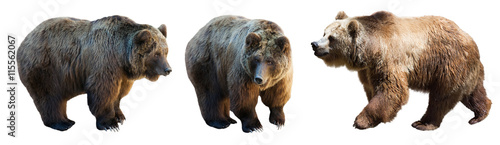 Photo  Set of 3 brown bears over white
