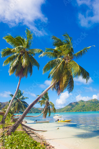 obraz lub plakat Palms over the beautiful lagoon on Praslin Island, Seychelles