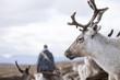 Sweden, Lapland, Levas, Portrait of reindeer (Rangifer tarandus)