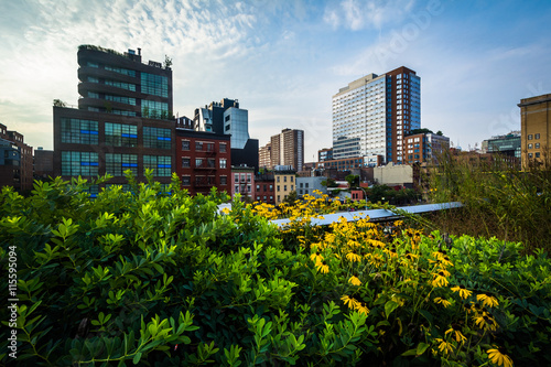 Photo  Flowers and view of buildings in Chelsea from The High Line, in