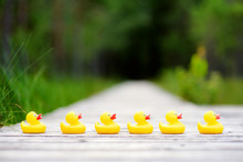 Six Rubber Ducklings Crossing The Street