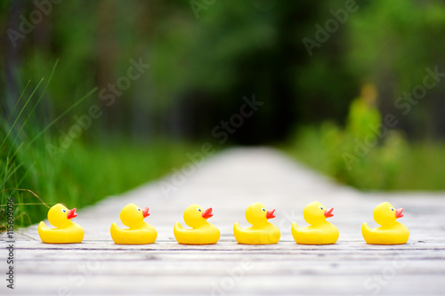 Canvas Print Six rubber ducklings crossing the street