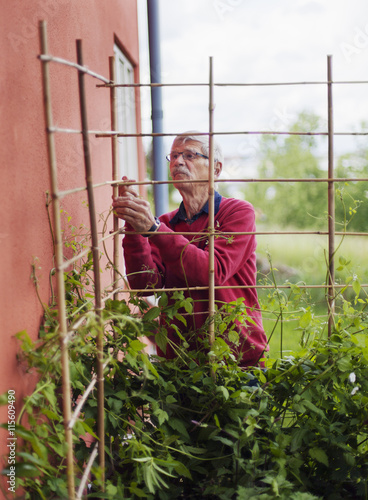 Sweden, Sodermanland, Senior man gardening