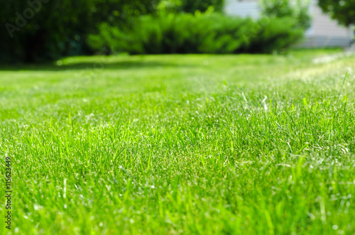 Poster Jardin green lawn yard