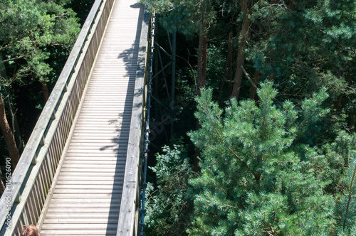 Plakát  Wooden footbridge crossing high up over a forest