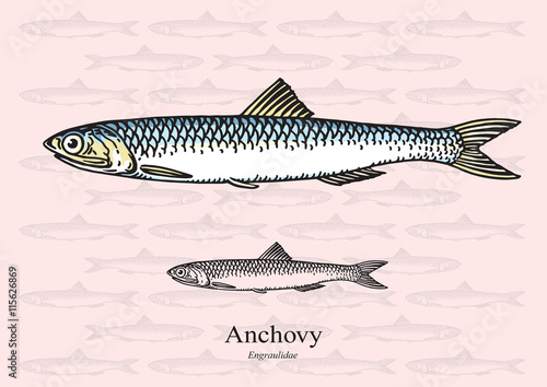Photo Anchovy fish