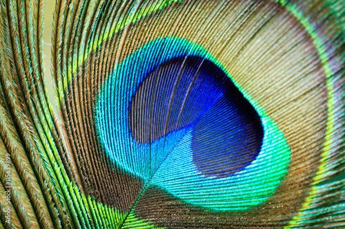 Foto op Aluminium Pauw Macro Peacock Feather