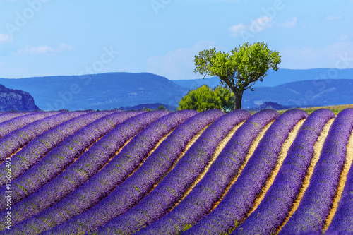 Photo  Landscape and lavender field, France new