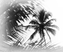 Horizontal Black And White Ind...