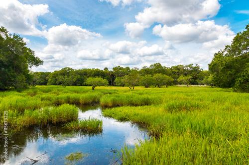 Florida wetland Canvas