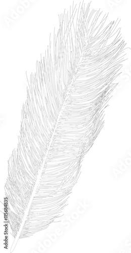 straight ostrich feather sketch isolated on white