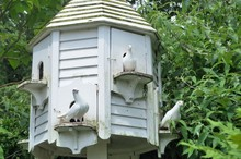 Three Doves In White Dovecote