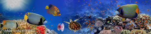 Plakat Podwodna panorama z żółwiem