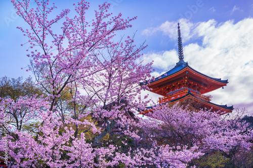 Tuinposter Kersenbloesem 京都 清水寺 桜 三重塔