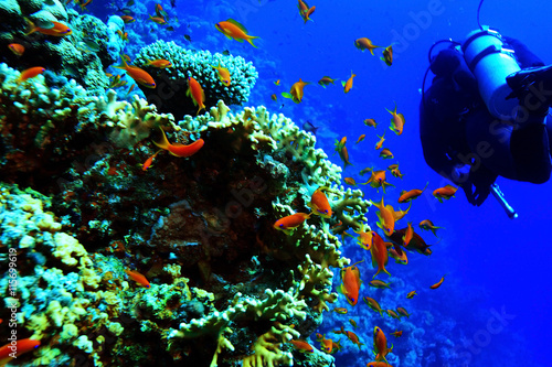 obraz lub plakat coral reef in the warm sea