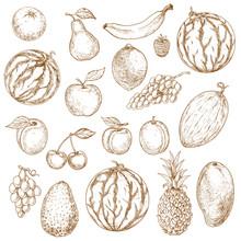 Vegan Fruits Sketch In Vintage Style