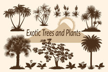 Exotic Plants, Tropical Palm T...