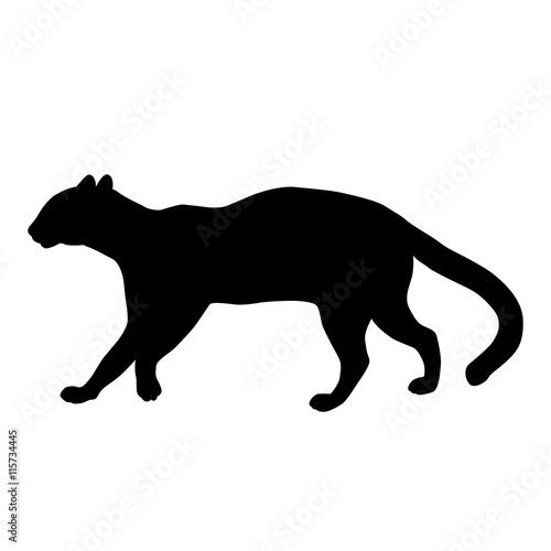 Photo  ocelot adult profile  black silhouette