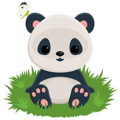 Fototapeta Panda Baby panda