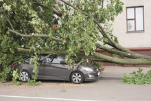 Car Destroyed By A Fallen Tree.