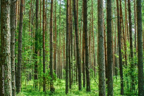 Foto auf Gartenposter Wald nice forest