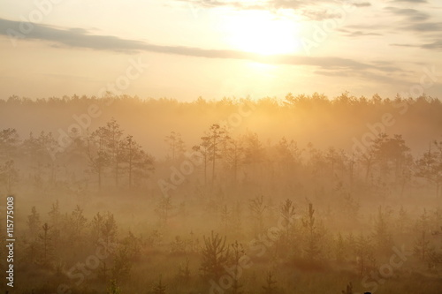 Foto auf Acrylglas Wald im Nebel morning mist in forest at dawn