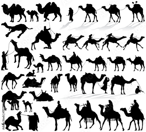 Fotografie, Obraz  Camel and dromedary vector silhouettes collection