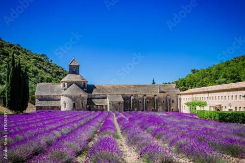 Garden Poster Lavender Champs de lavandes devant l'Abbaye Notre-Dame-de-Sénanque