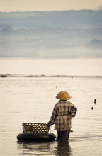 Seaweed Farmer.  On A Small Is...