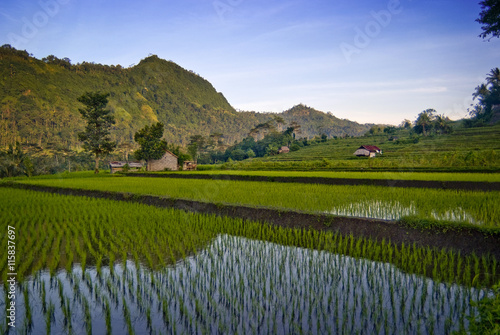 Foto auf Gartenposter Reisfelder Sidemen, Bali Rice Field. New rice is planted in flooded terraces in the village of Sidemen where you can see some of the most beautiful and dramatic rice fields in all of Bali.