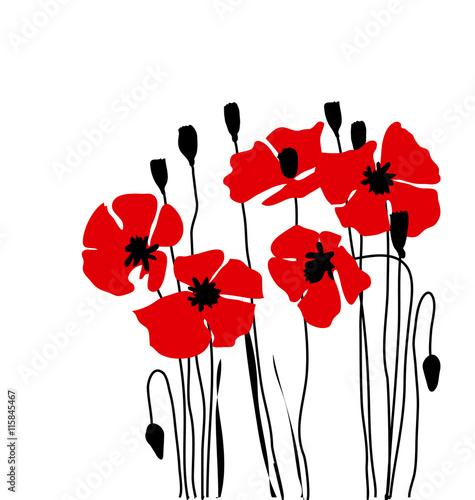 poppy floral vector illustration