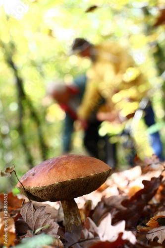 Fotografie, Obraz  cueillette de champignon