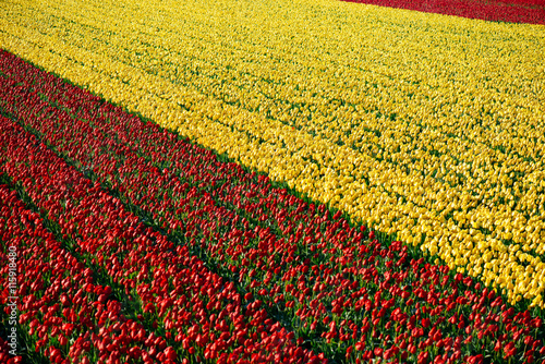 Poster Flower shop tulpen in Nederland