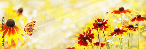 Poster Jaune Summer, Sun, Rudbeckia, Insects